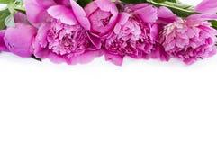 Roze pioenen bij grens van beeld met exemplaarruimte voor tekst Hoogste mening Stock Afbeelding