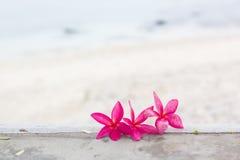 Roze plumeria op het strand Stock Foto's