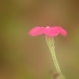 Roze Profiel Stock Foto's