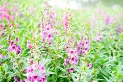 Roze purpere bloemen in brede weide Stock Foto's
