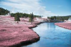 Roze riviervallei Stock Fotografie