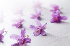 Roze rododendronbloemen Stock Fotografie