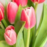 Roze, rood rozenboeket met Witte achtergrond royalty-vrije stock afbeeldingen
