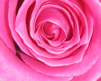 Roze Rose Background - de Foto's van de Bloemvoorraad Stock Foto's