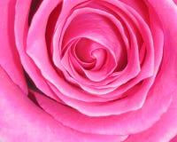 Roze Rose Background - de Foto's van de Bloemvoorraad Stock Foto's
