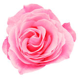 Roze Rose Cut Out Stock Foto's