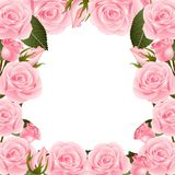 Roze Rose Flower Frame Border Geïsoleerdj op witte achtergrond Vector illustratie royalty-vrije illustratie