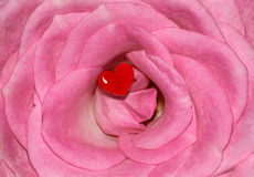Roze Rose Flower Love Red Heart Stock Fotografie