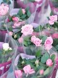 Roze Rose Flower verfraait voor de Dag van Valentine stock afbeeldingen