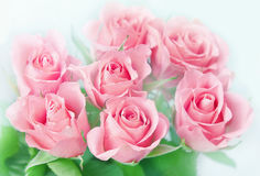 Roze rozen. stock fotografie