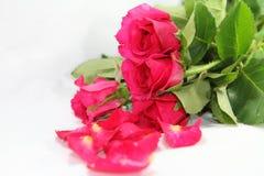 Roze rozen Royalty-vrije Stock Foto's