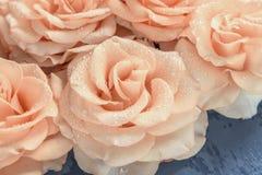 Roze rozen in dalingen van vochtigheidsclose-up royalty-vrije stock afbeeldingen