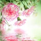 Roze rozen en vlinder, bloemenachtergrond Royalty-vrije Stock Fotografie