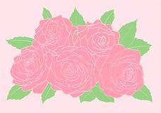 Roze rozen met groen bladerenclose-up Stock Afbeeldingen