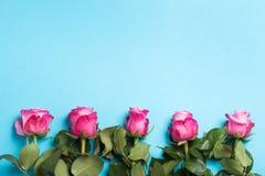 Roze rozen op blauwe kleurenachtergrond Hoogste mening stock afbeeldingen