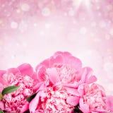 Roze rozen op bokehachtergrond Stock Afbeeldingen