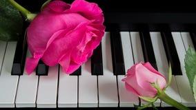Roze rozen op de piano Een grote bloem en een kleine Knop Romaans, viering, prentbriefkaar Moederdag, Verjaardag, 8 Maart, Valent stock foto's