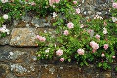 Roze rozen op een oude steenmuur royalty-vrije stock fotografie