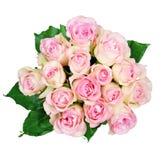 Roze rozen op witte achtergrond Royalty-vrije Stock Foto