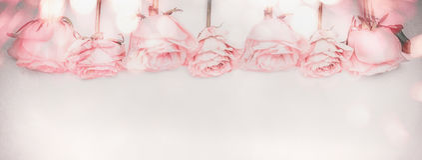 Roze rozen panoramische grens met bokehverlichting en langzaam verdwenen kleuren stock foto's