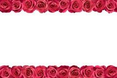 Roze rozen in rijen 2 royalty-vrije stock foto