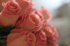 Roze rozen, velen, offerte, mooi, voor vrouwen stock foto's