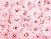 Roze rozenachtergrond royalty-vrije stock afbeelding