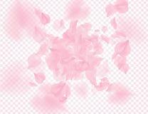 Roze rozenbloemblaadjes die op transparante achtergrond vallen De vectorachtergrond van bekledingsvalentijnskaarten 3D romantisch stock illustratie