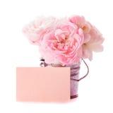 Roze rozenbos Royalty-vrije Stock Afbeeldingen
