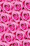 Roze rozenpatroon Stock Afbeelding