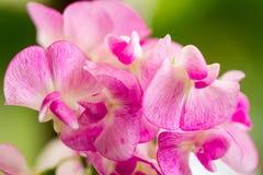 Roze schat wilde bloem stock foto's