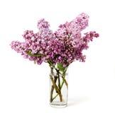 Roze sering Royalty-vrije Stock Afbeelding