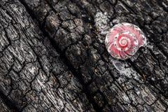 roze shell op de boom Royalty-vrije Stock Afbeelding