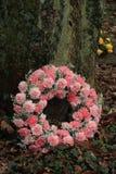 Roze Sympathiekroon dichtbij een boom royalty-vrije stock foto