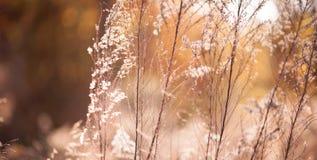 Roze takken onder zonneschijn Stock Foto's