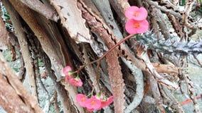 Roze tedere bloemen op de achtergrond van ruw en doorn stock foto
