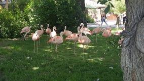 Roze Troep stock fotografie