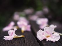 Roze trompetbloemen die neer op houten bank vallen royalty-vrije stock fotografie