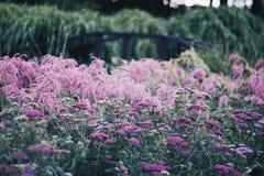 Roze tuin Royalty-vrije Stock Foto's