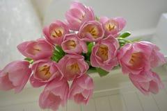 Roze tullips Amazindly gevoelige bloemen stock afbeelding