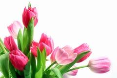 Roze Tulpen Stock Fotografie