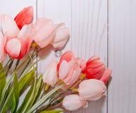 Roze tulpen met een witte achtergrond Stock Fotografie