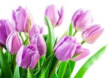 Roze tulpen met waterdalingen Royalty-vrije Stock Foto's