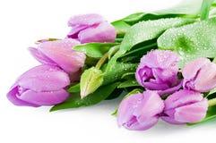 Roze tulpen met waterdalingen Stock Fotografie