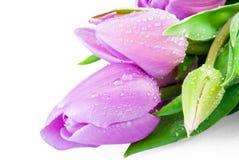 Roze tulpen met waterdalingen Stock Foto's