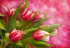Roze tulpen op achtergrond Stock Foto's