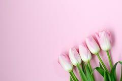 Roze tulpen op de roze achtergrond Vlak leg, hoogste mening De achtergrond van valentijnskaarten Royalty-vrije Stock Afbeelding