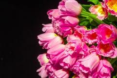 Roze Tulpen op zwarte achtergrond Vlak leg, hoogste mening De achtergrond van valentijnskaarten Boeket van roze tulpen op een lic royalty-vrije stock afbeeldingen