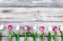 Roze tulpen voor Pasen-Vakantie op rustieke witte houten raad Stock Foto
