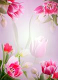 Roze tulpenachtergrond Royalty-vrije Stock Afbeeldingen